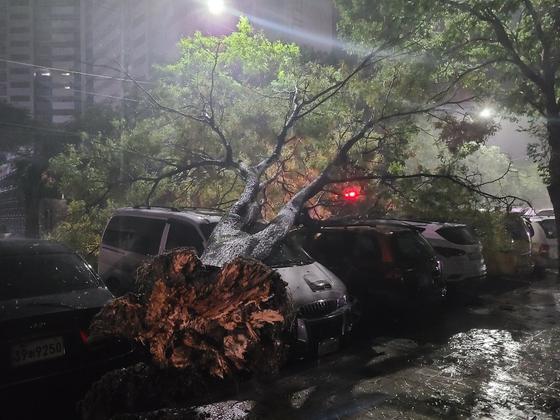 3일 오전 제9호 태풍 '마이삭'의 영향으로 대구시 달서구 도원동 한 주차장에 나무가 쓰러져 차량을 덮쳤다. 대구소방안전본부