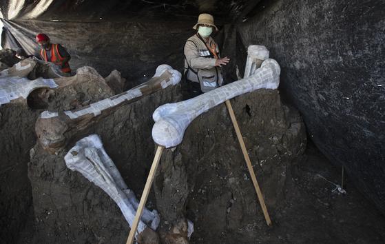 멕시코 때문에 매머드 200 마리의 뼈 무덤 발견 … 멸종 밝혔다 단서있다
