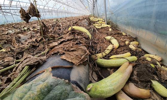 충남 천안에 있는 한 시설작물 농가가 장마로 수해를 입은 모습