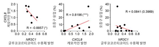 글루코 코르티코이드 수용체의 발현과 CXCL8의 발현이 음의 상관 관계를 보인다 (왼쪽). CXCL8의 발현 및 호중구의 유입은 양의 상관 관계를 보인다 (중). 글루코 코르티코이드 수용체의 발현과 호중구의 유입은 소리의 상관 관계를 보인다 (오른쪽) [자료 KAIST]