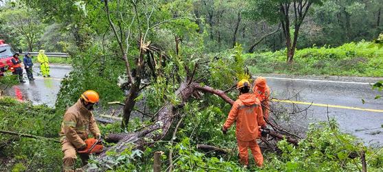 7일 오전 7시 35분께 전남 함평군 해보면 광암리의 한 도로에서 강풍에 쓰러진 나무를 소방관들이 제거하고 있다. 사진 전남 소방본부