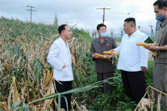 북한의 태풍피해 현장에서 옥수수를 살펴보는 김정은 북한 국무위원장. 주머니에 손을 넣고 있는 한 고위 간부의 모습이 이채롭다. [연합뉴스]