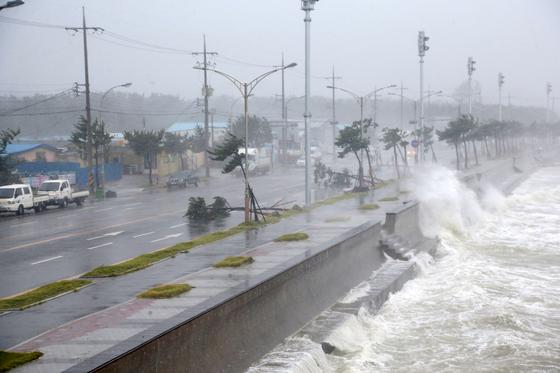 태풍 '마이삭'으로 큰 나무 뿌리가 뽑혀 잘려나갔다. 도시에 살 땐 뉴스에서만 보던 피해 상황이 자연과 함께하는 시골살이에선 참 많은 시련을 안겨주는 현실이 된다. [연합뉴스]