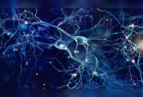 코로나19 바이러스가 뇌세포에 침입해 뇌 손상을 일으킨다는 주장을 뒷받침하는 연구 결과나 나왔다. 연구진에 따르면 코로나19 바이러스는 뇌 속에 산소공급을 차단해 신경세포를 서서히 괴사시켰다. 위 사진은 지난 7월 예일대가 이미지화 한 뉴런이 죽었을 때 반응하는 뇌 사진. [사진 예일대]