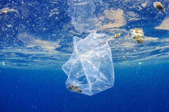 인도양에서 한 마리가 바다에 버려진 비닐 봉지에 갇혔다. Alex Mustard / WWF