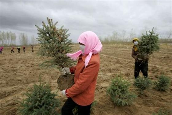모래폭풍 속에서도 한 여성이 나무를 심고 있다. [트위터]
