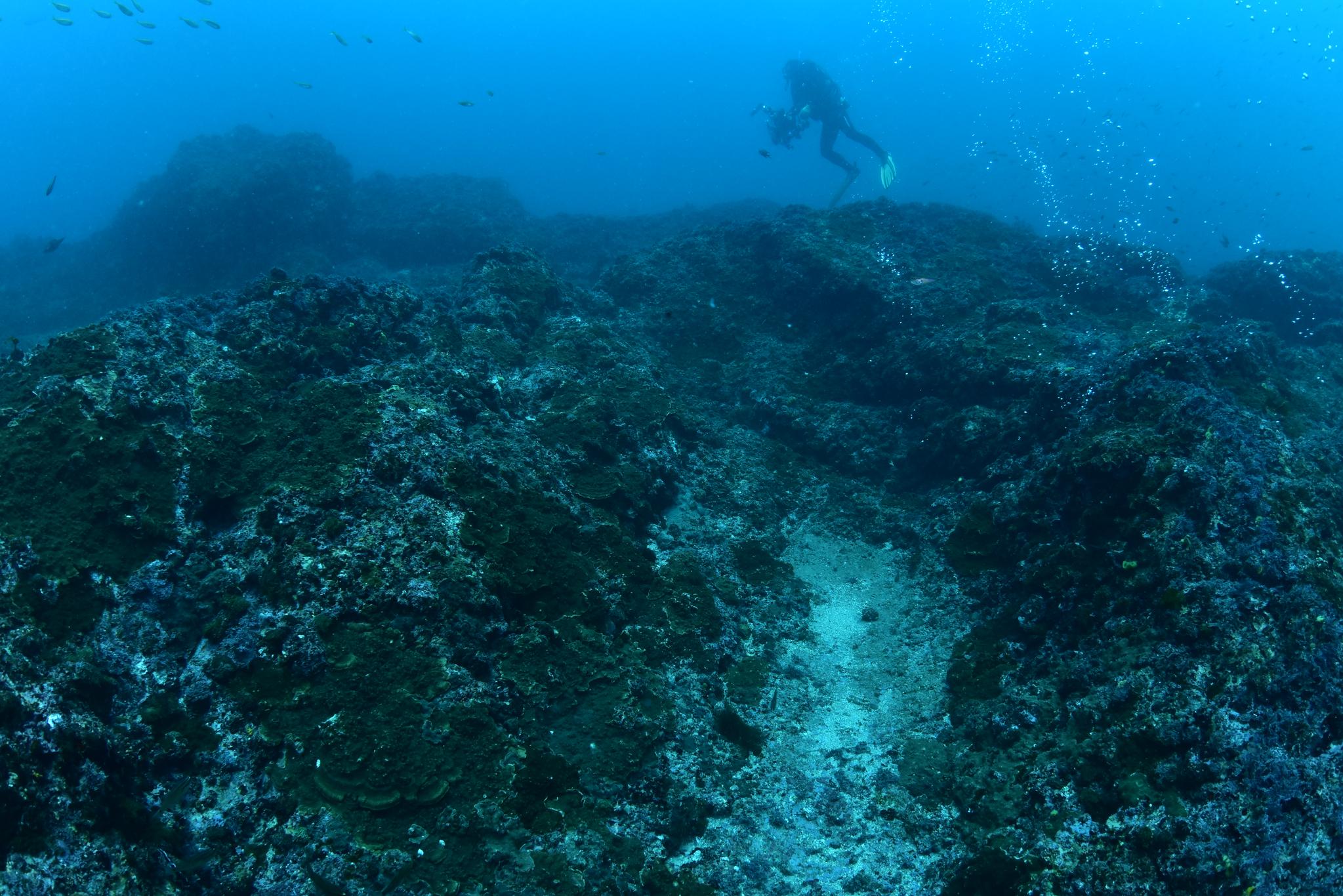 제주 서귀포시 문섬 주변 바다. 해조류가 사라지고 아열대 바다에 서식하는 돌산호 등이 바닥을 뒤덮고 있다. 이선명 수중 사진작가