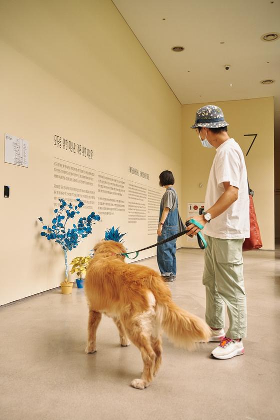 '개를 위한 미술관' 전시 전경. 25일 온라인으로 공개된다. 박수환 촬영.  [국립현대미술관]