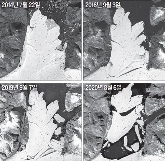 그린란드 북동부의 79N 빙붕(바다에 떠 있는 얼음)에서 거대한 얼음덩어리가 떨어져 나가는 모습이 위성에 포착됐다. [사진 그린란드 지질조사국]