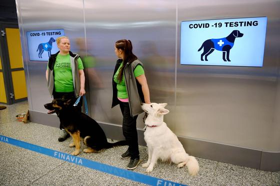 지난 22일(현지시간) 핀란드 헬싱키공항에서 코로나19 탐지견 발로(왼쪽)과 이티가 검사를 위해 대기하는 모습. AFP=연합뉴스