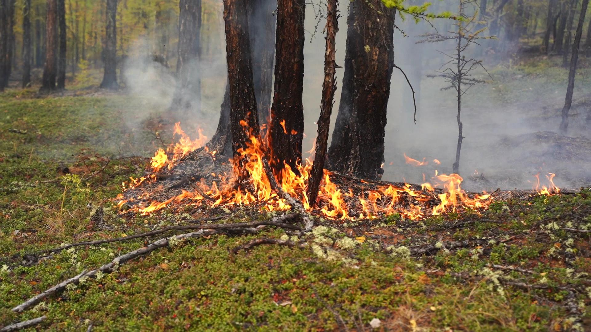 '역대급' 이상 고온과 건조한 날씨가 찾아오면서 올 여름 시베리아에선 화재가 끊이질 않았다. 지난달 러시아 사하공화국 빌류이스키 숲에서 거센 불씨가 나무를 삼키는 모습. 사진 sreda studio