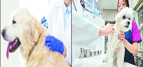 지난 4월 서울 마포구가 3개월 이상 반려동물들에 대해 광견병 예방 접종을 했다. [연합뉴스]