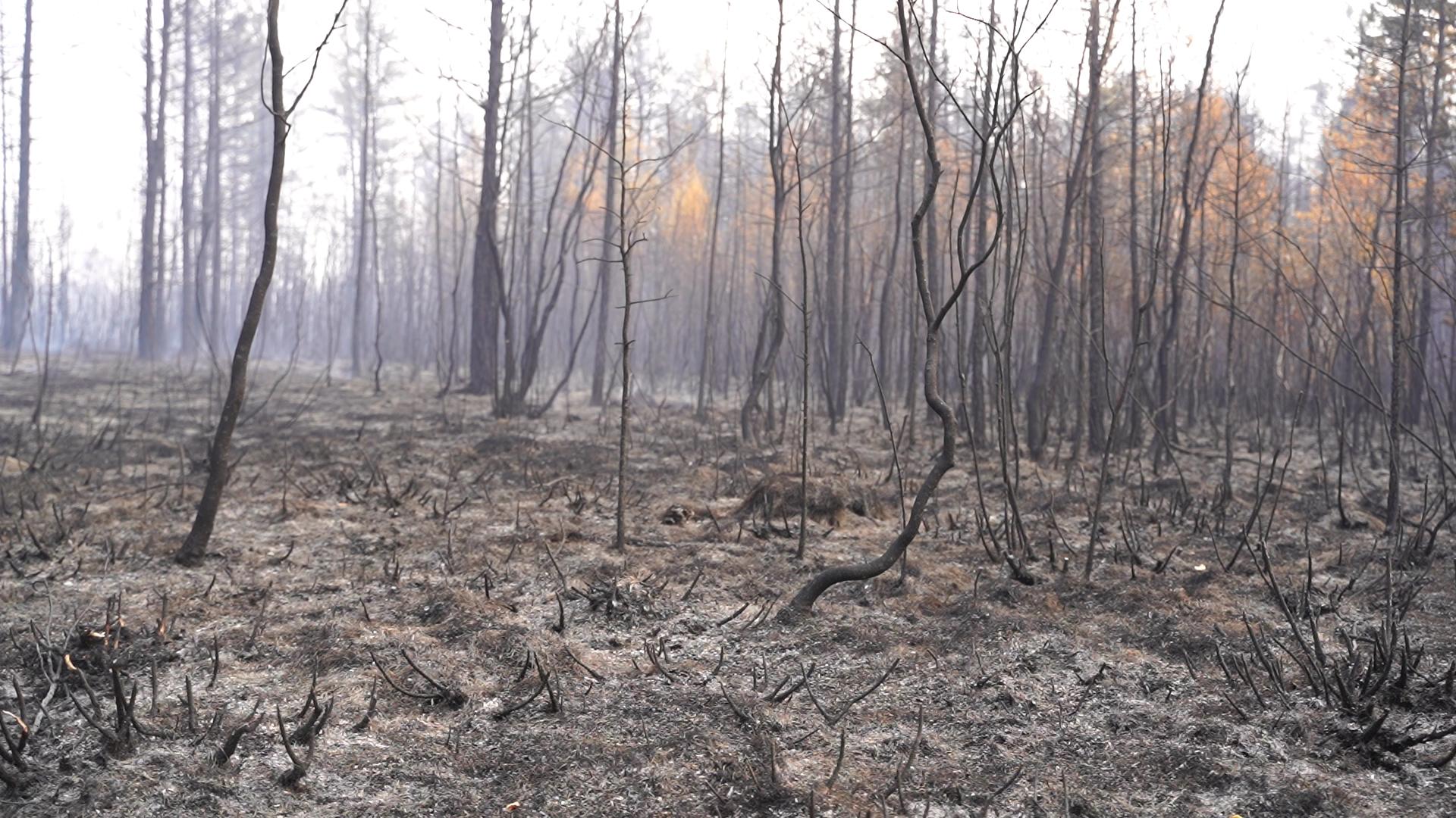 지난달 불에 완전히 타버려 잿빛 폐허로 변해버린 러시아 사하공화국의 빌류이스키 숲. 화재 직전 울창했던 숲에선 더이상 생명의 움직임이 보이지 않는다. 사진 sreda studio