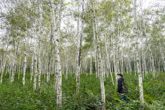 한적한 숲에서 하루를 보내노라면, 절로 도시의 피로가 사라질 것만 같다. BTS가 다녀간 자작나무숲으로 유명한 양평 서후리숲. 한 가족이 20년 넘게 가꾼 숲이다.