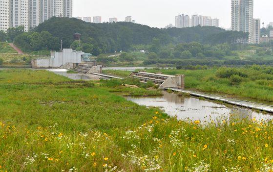 세종보 개방으로 세종시 금강 주변이 잡초밭으로 변해있다. 프리랜서 김성태