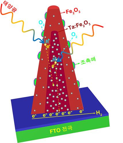 UNIST가 개발한 광촉매의 구조 및 수소 생성 반응 모식도. 코어-쉘 나노막대 구조의 산화철 광촉매 전극이 햇빛을 흡수하여 광전자(photoelectron, 음전하)와 전공(hole, 양전하)을 생성하고 이들이 물을 분해하여 수소 (H2)와 산소 (O2)를 만드는 과정을 보여주고 있다. [그림 UNIST]