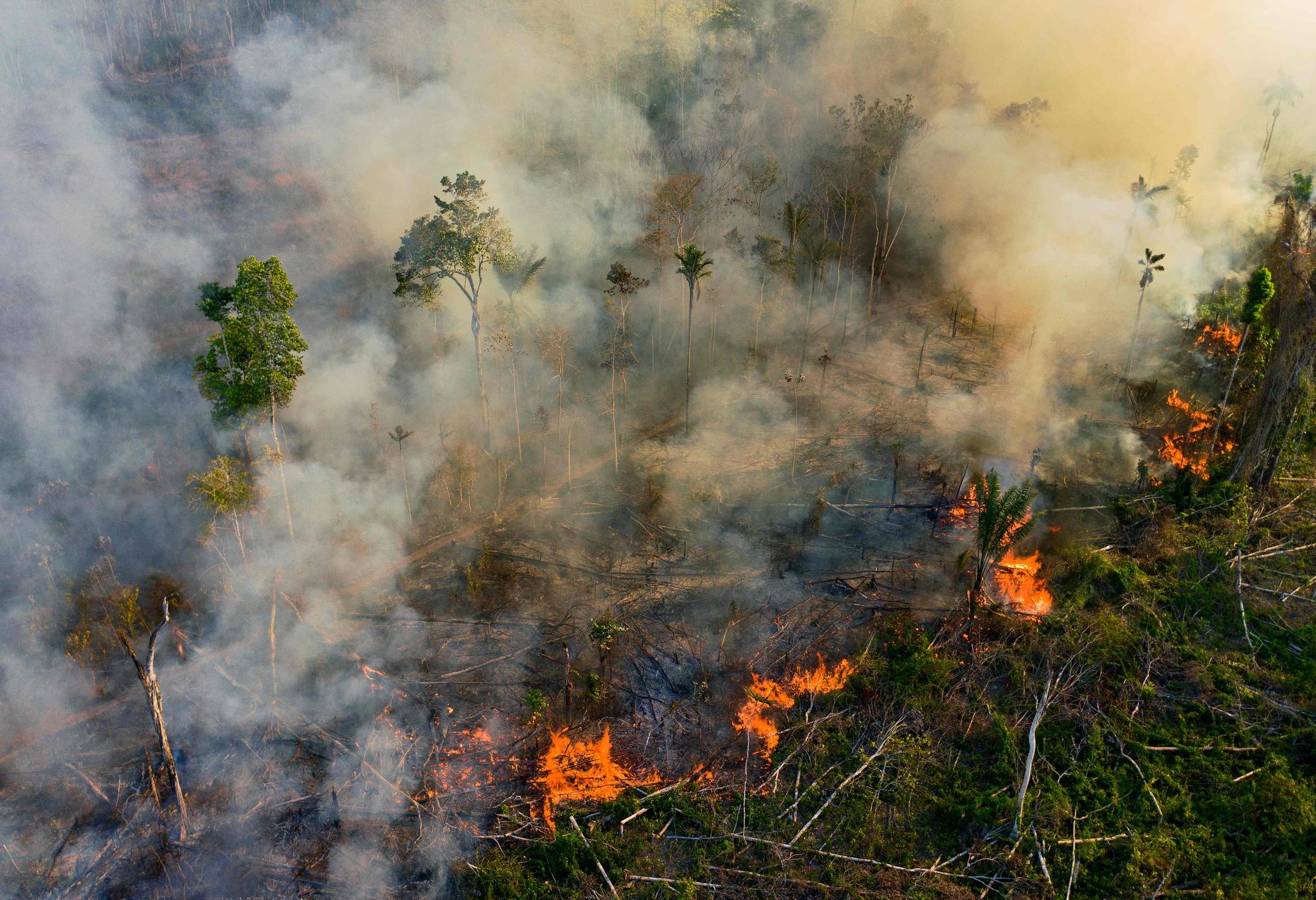 코로나 피해 5580조, 생태보호에 0.6%만 써도 팬데믹 막는다