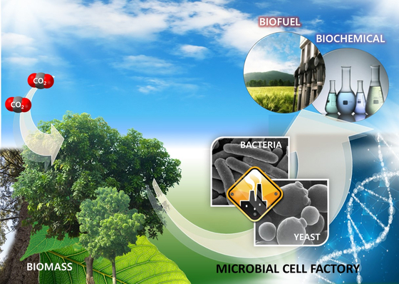 목질계 바이오매스를 원료로 미생물을 이용하여 바이오연료를 생산하는 개념도  [자료 KIST]