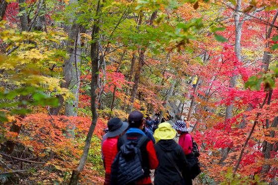 지난해 10월 강원도 평창군 오대산국립공원 내 선재길을 찾은 탐방객들이 울긋불긋 물든 단풍을 감상하며 걷고 있는 모습. 뉴스1