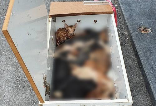밀폐 상자에 갇힌 고양이. 10마리 중 9마리가 죽었다. [목포고양이보호연합 제공, 연합뉴스]