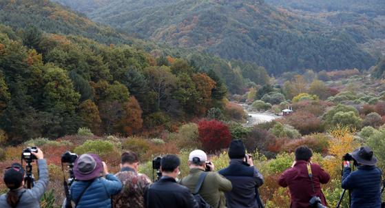 15일 오전 강원 인제군 남면 갑둔리 일명 '비밀의 정원'에 전국 각지에서 몰려든 사진가들이 서리 내린 가을 풍경을 담고 있다. 연합뉴스
