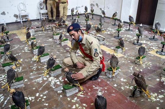 17일(현지시간) 파키스탄에서 밀반출될뻔한 멸종위기종 매 75마리가 구조됐다. [연합뉴스]