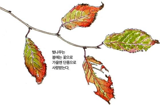 [소년중앙] 노랗게 빨갛게 단풍이 드는 세 가지 이유