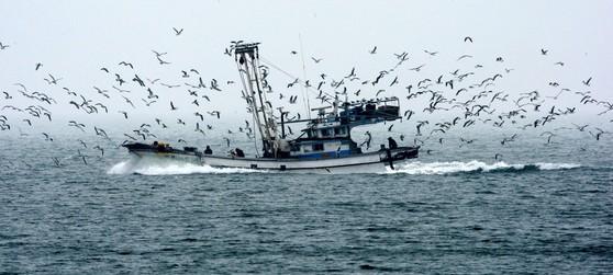서해 연평도 인근 바다에서 조업 중인 어선. [중앙포토]