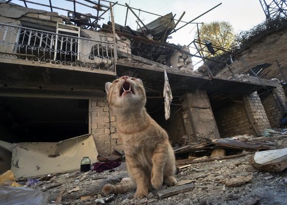 10월 13일 아제르바이잔의 포격을 받은 나고르노카라바흐 중심지 스테파나케르트의 무너진 주택 앞에서 고양이가 울고 있다. AP=연합뉴스