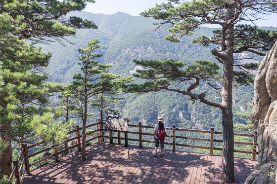강원도 동해시에 무릉계곡과 박달계곡을 잇는 '베틀바위산성길' 일부 구간이 지난 8월 공개됐다. [사진 한국관광공사]
