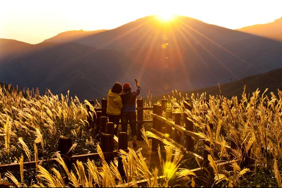 한국을 대표하는 억새 명소인 영남알프스 간월재. 햇볕을 받은 억새꽃이 황금빛을 띠고 있다. [사진 울주군]
