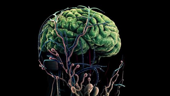 인간의 뇌를 형상화한 그래픽. 뉴스1