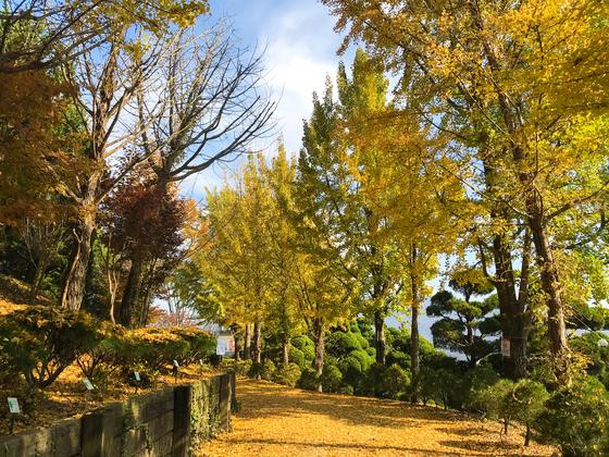 베어트리파크 '가을 산책길'. 24일부터 11월 8일까지만 드나들 수 있는 산책길로, 낙엽을 밟으며 걷기 좋은 장소다. [사진 베어트리파크]