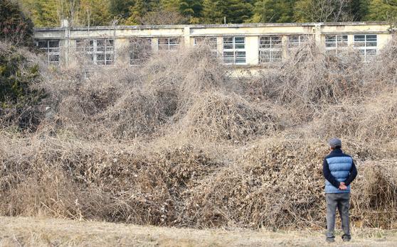 지난 1999년 3월 전남 고흥군 두원면 두원초등학교는 학생 감소로 문을 닫았다. 지난해 3월 학교를 찾은 주민이 지난해 수풀로 우거진 채 방치된 교정을 바라보고 있다. 위 사진은 해당 기사와 관련 없음. 프리랜서 장정필
