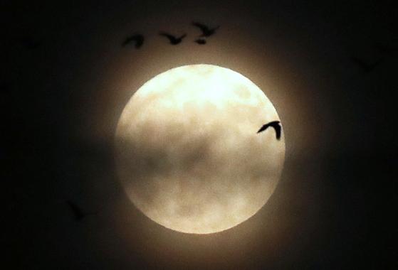 핼러윈데이(Halloweenday)인 31일 오후 울산 태화강 상공에서 19년 만에 뜬 '핼러윈 블루문' 주위로 떼까마귀가 비행하고 있다. 뉴스1
