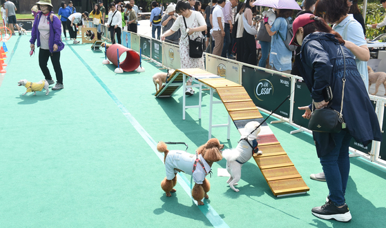 서울 노원구는 지난달 31일 중계동 등나무근린공원에서 반려동물 문화축제 '2020 노원에서 반려동물과 함께'를 개최했다. 사진은 지난해 축제 모습. [사진 노원구]
