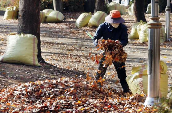 지난 10일 인천광역시 남동구 중앙공원에서 관계자가 낙엽을 마대자루에 담고 있다. 뉴시스