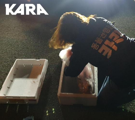 동물보호단체 카라가 울산 울주군에서 발생한 동물 학대 사건을 조사하기 위해 토치에 그을린 채 죽은 개 사체를 옮기고 있다. 사진 동물보호단체 카라