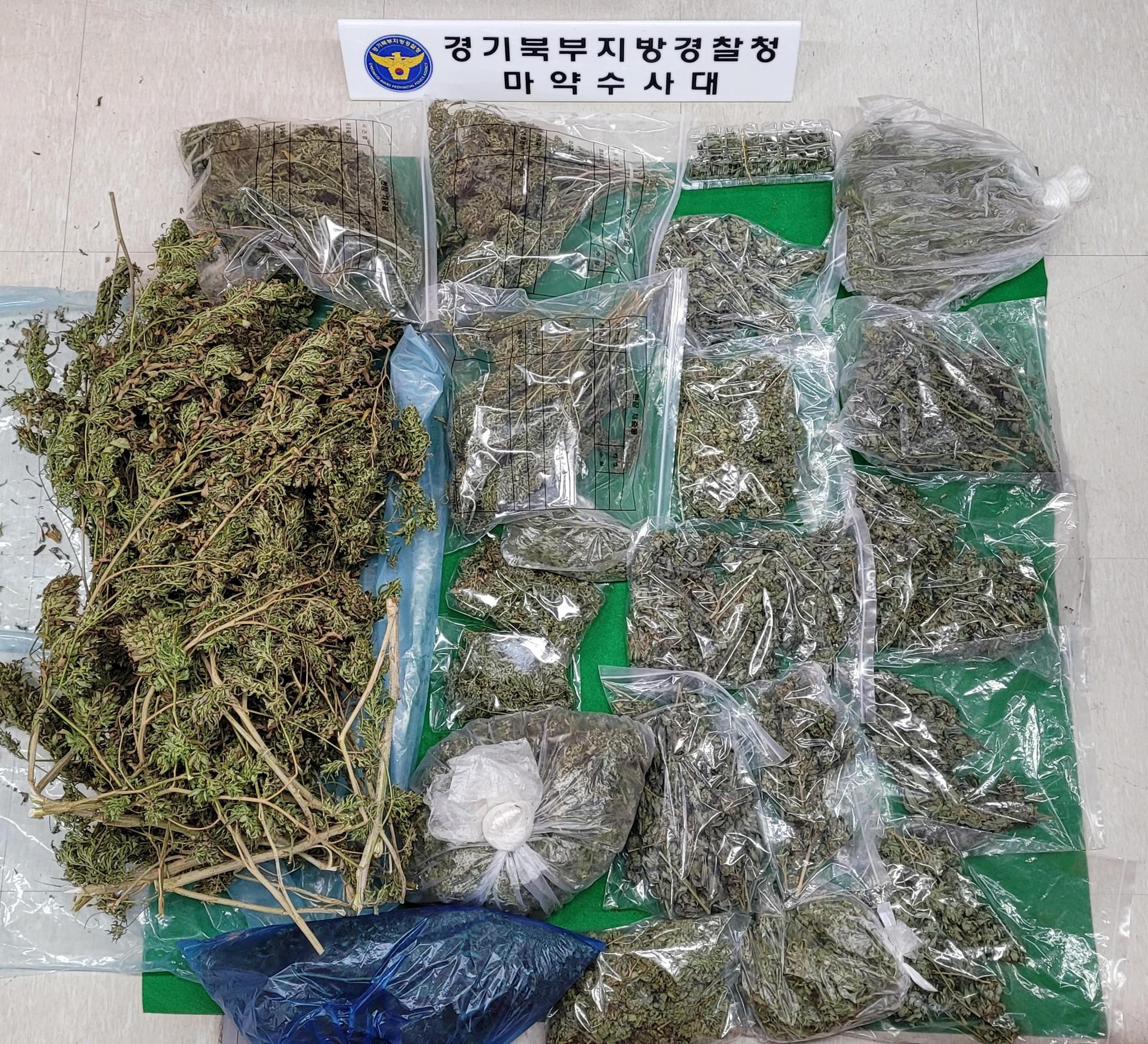 야산에서 재배한 후 건조한 대마. 사진 경기북부지방경찰청