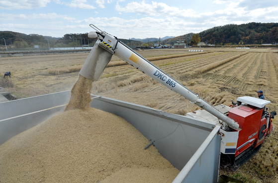 올가을 들어 가장 쌀쌀한 날씨를 보인 3일 오후 대전시 서구 기성동 들녘에서 한 농민이 콘바인을 이용, 막바지 벼를 수확 한 뒤 트럭에 옮겨싣고 있다. 중앙포토