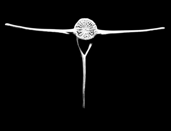 샬롯 페리앙의 사진 '물고기의 척추골'. 1933 ⓒ Archives Charlotte Perriand