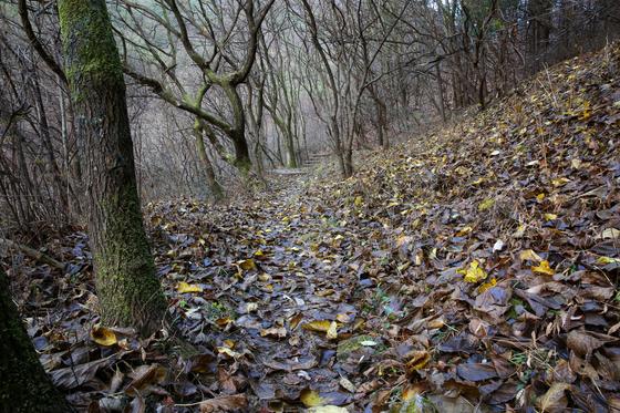 가을 끄트머리 혹은 겨울 어귀 소백산자락길을 걸었다. 낙엽 밟는 소리가 걸음 내내 따라왔다.