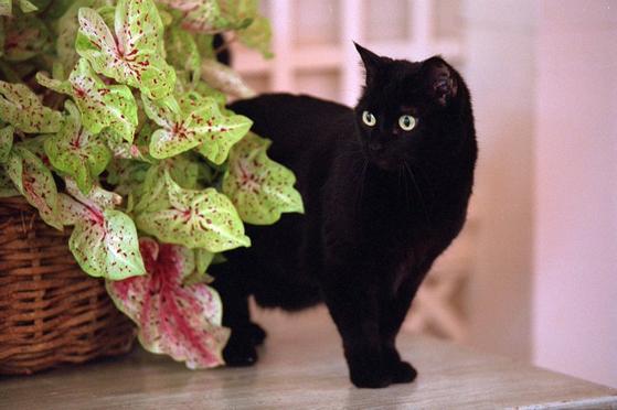 조지 W 부시가 백악관에서 키웠던 고양이 인디아. [트위터]