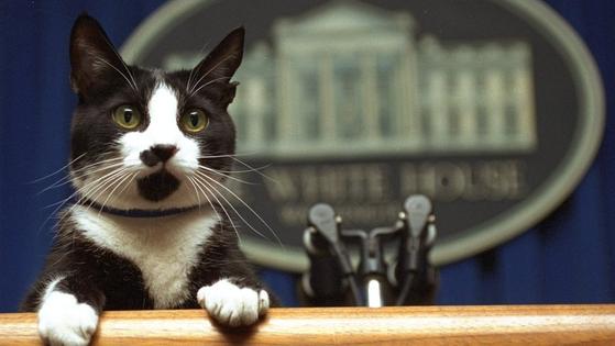 빌 클린턴 전 대통령이 키웠던 고양이 삭스. [트위터]