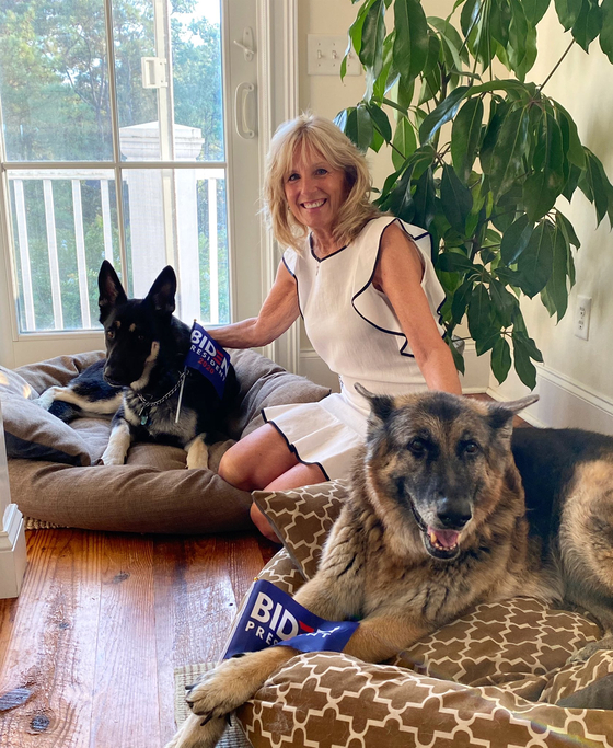 질 바이든 여사와 반려견 메이저(왼쪽)과 챔프(오른쪽). 사진 트위터 캡처