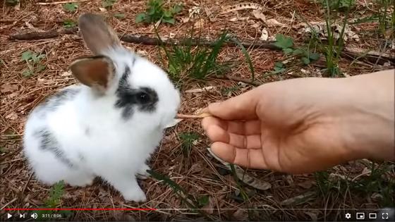 유튜버 '꿈산'의 토끼 영상. [사진 유튜브 꿈산 캡처]