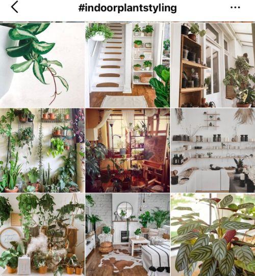 인스타그램에서 해시태그 'indoorplantstyling'로 검색한 식물인테리어 모습. [사진 인스타그램]