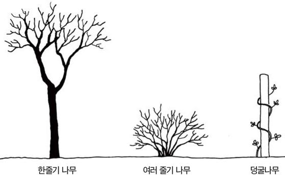 우리 주변 식물들의 비밀 이야기