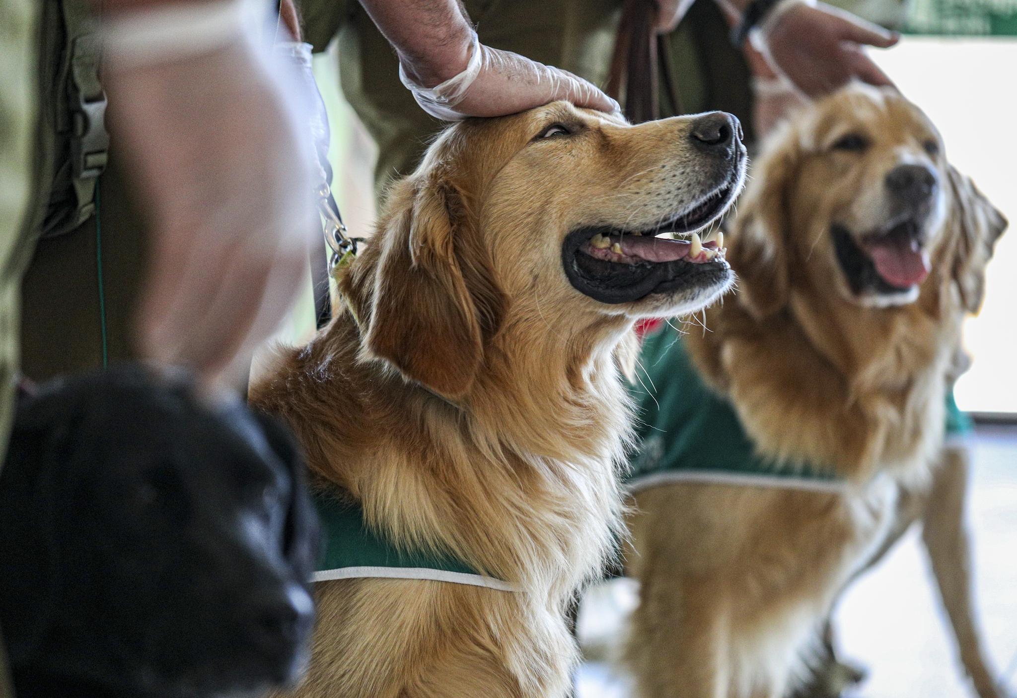 칠레 경찰 조련사들이 21일(현지시간) 수도 산티아고 국제공항에서 코로나 탐지견들을 언론에 공개한 뒤 머리를 쓰다듬고 있다. 칠레 내무부에 따르면 개들은 22일부터 임무에 투입된다. AP=연합뉴스