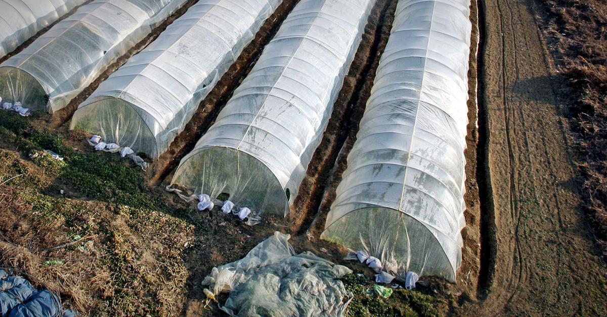 비닐하우스(※이 사진은 기사 내용과 직접적인 관련 없음). 중앙포토